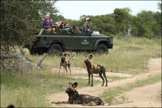 Viewing Wild Dogs at the Savanna Lodge (from the Savanna Lodge blog).