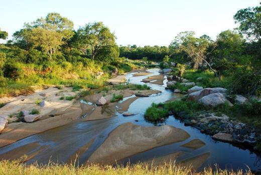Kruger morning