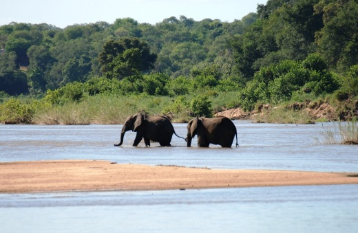 river elephants