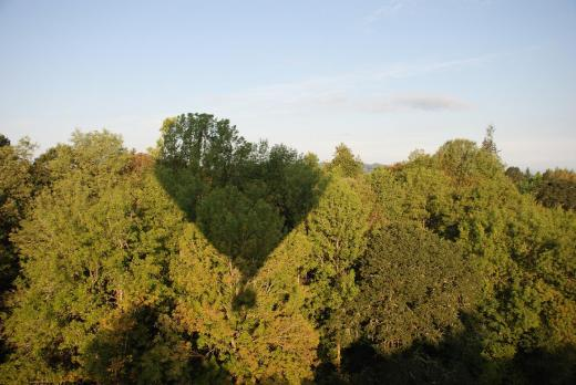 Our shadow on the trees