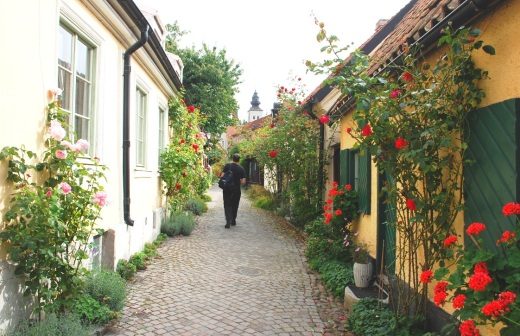 street of roses