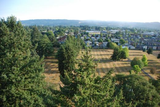 Tree top level, looking for a spot to land in Newberg.