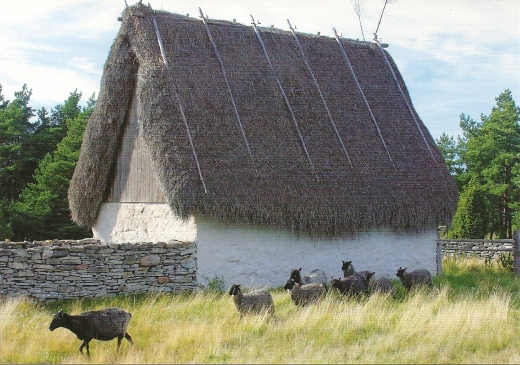 cottage with sheep