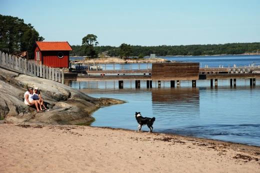 Dogs on the beach in Sandhamn