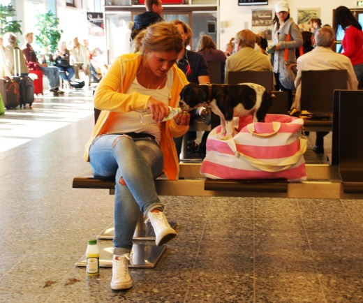 A woman gives her puppy a drink of water in the waiting area for the ferry to Gotland.