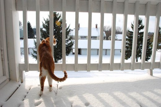 Discovering snow for the first time.