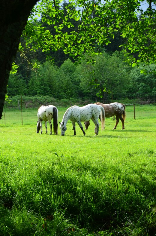 The neighbor's horses.