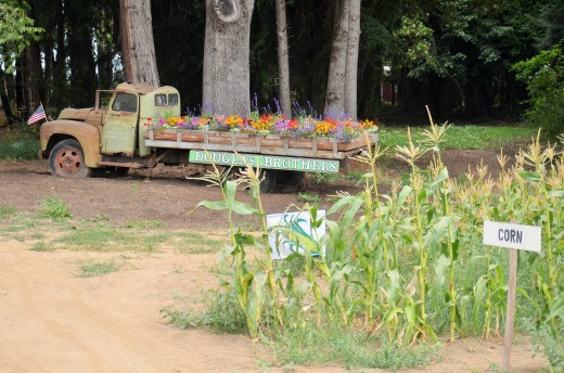 An old International truck marks the entrance to Douglas Farms on Sauvie island.