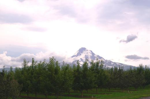 Mt. Hood, taken from Hood River with orchards in the foreground.