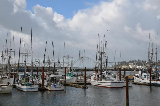 Boats in the Newport, Oregon harbor
