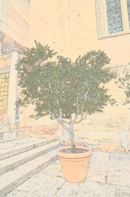 A photo of an olive tree in the Piazza Duomo in Verona, using color sketch by Nikon