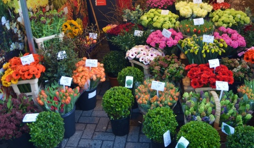 The only flower market stall with fresh flowers in the month of February