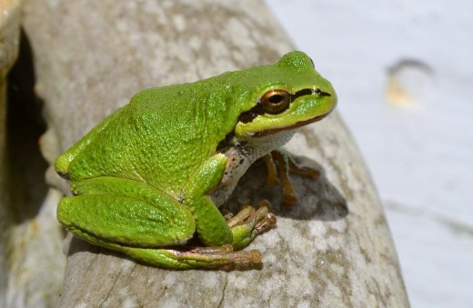 Even the frogs are pretty colors in the Spring