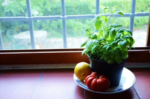 basil, priomo pomodoro, lemon