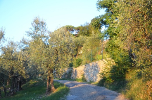 The road leading up into the hills from Caldine to the Fattoria Il Leccio, the home of Andrea Passigli
