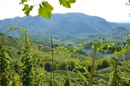 Along the Strada Del Prosecco