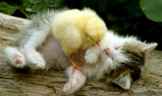 Commerical Easter wouldn't be complete with a kitten/baby chick picture