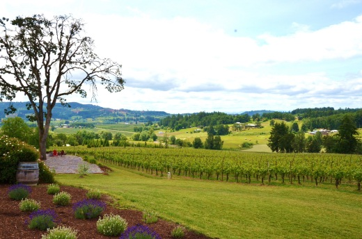 The beautiful view of Lachini Vineyards