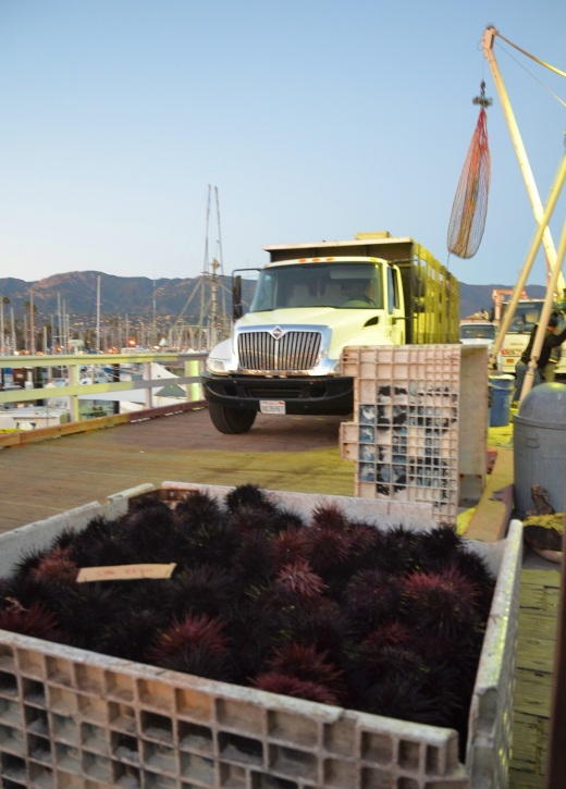 truck-and-urchins