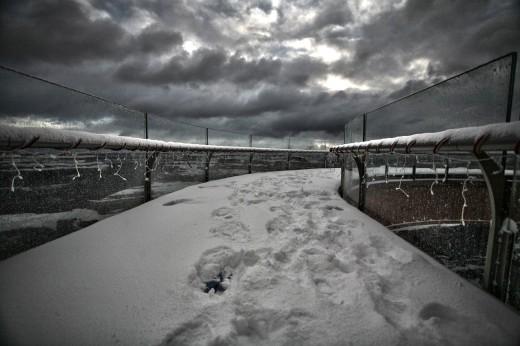 14 SNOW DAY