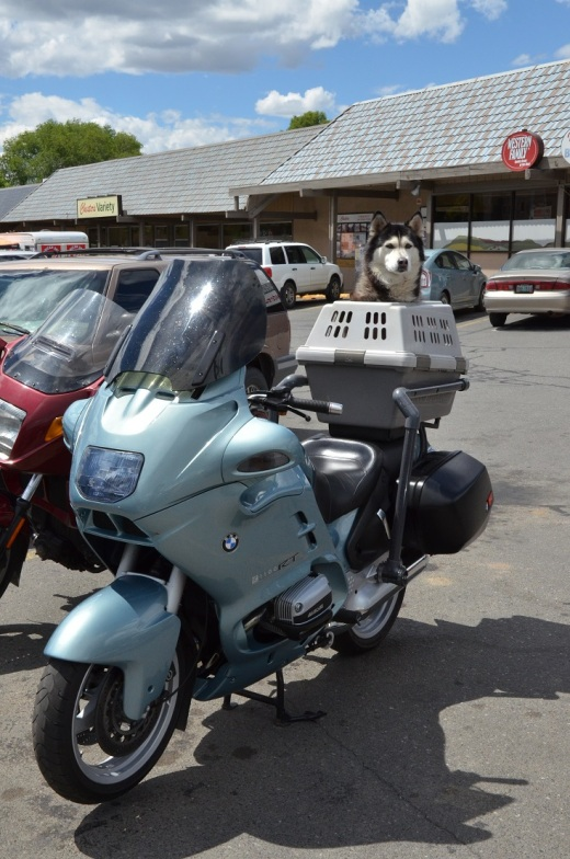 bike with husky