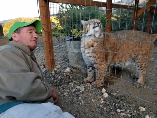 Tucker and bobcat