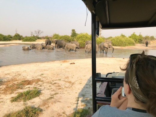 becky watching elephants