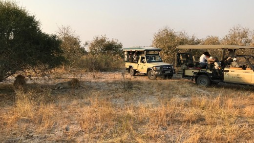 lions and jeeps