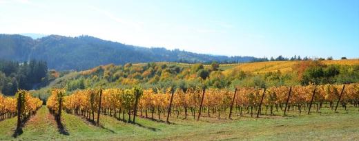 Fairsing vines